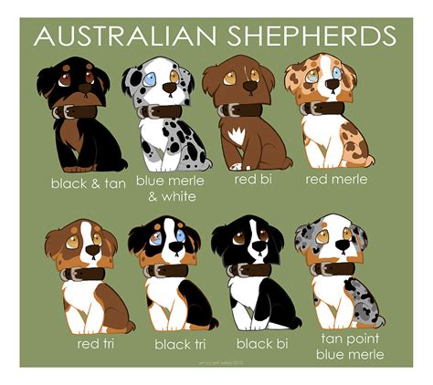 australian shepherd colors australian shepherd color patterns by briteddy on deviantart