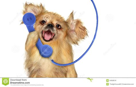 dogs talking with phone royalty free stock image image 34958516