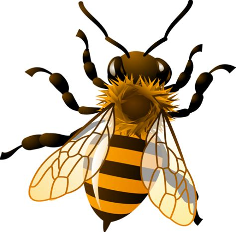bee clipart honey bee clipart clipart kid bees bee
