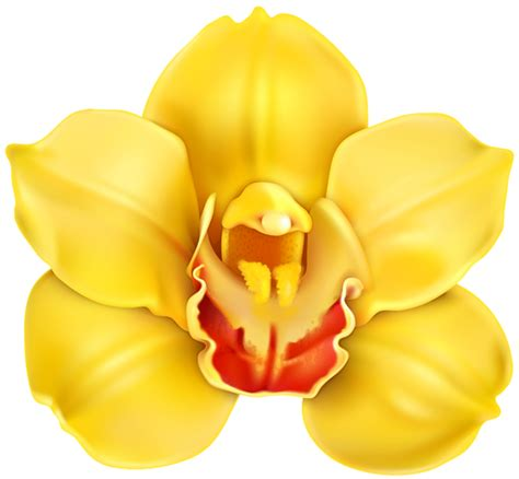 Orchid Yellow yellow orchid transparent png clip clipart