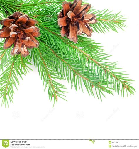 fir cone decorations decorations royalty free stock photography