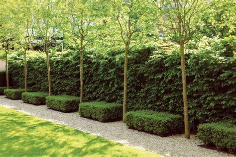 garten hecken ideen glorious hedges gallery garden design