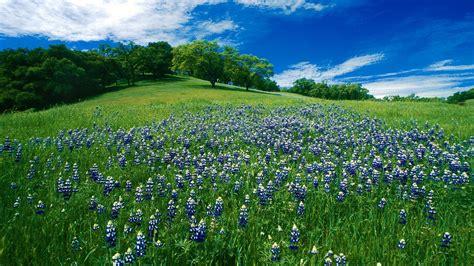 imagenes de verdes praderas la pradera verde primaveral wallpaper bobiandcompany
