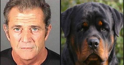 mels dogs 16 mugshots and their lookalikes