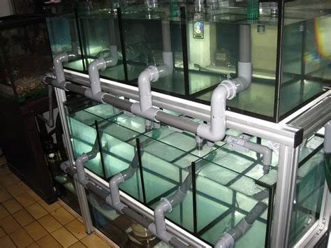 fish room build 25 best ideas about fish on freshwater fish tank betta and tropical fish