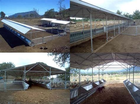 cobertizo ovino corral modular para vientres de ovinos