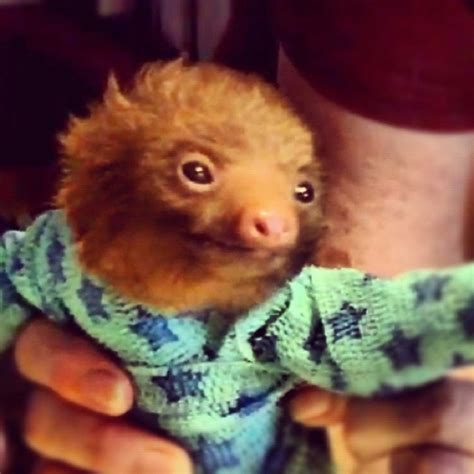 Baby sloth in pajamas   Cute animals   Pinterest   Cas