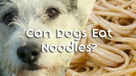 can dogs eat noodles can dogs eat noodles pet consider