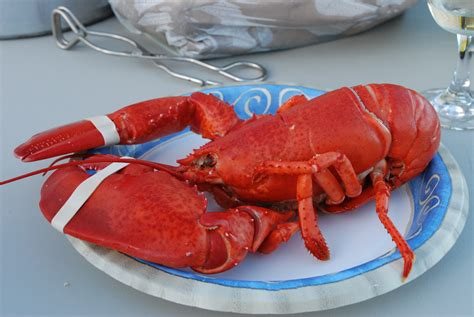 lobster house maine lobster delivery order online and have it autos post