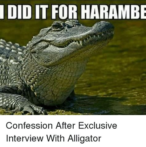 Alligator Meme - did it for harambe confession after exclusive interview