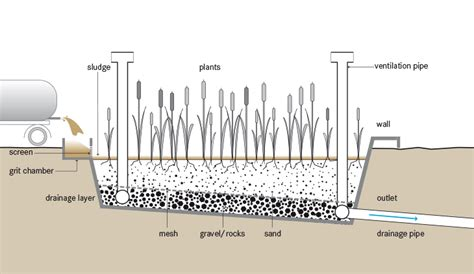 design criteria for sludge drying beds planted drying beds sswm