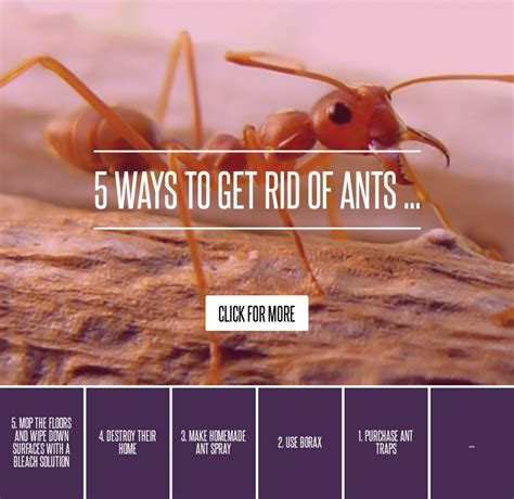 Safe Way To Get Rid Of Ants In Kitchen by 2 Use Borax 5 Ways To Get Rid Of Ants Gardening