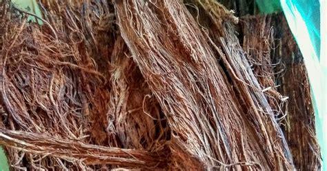 Dan Kegunaan Sho Nr keep walking 13 khasiat dan kegunaan akar beluru atau akar sintok