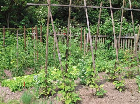 Bambus Pflanze Kaufen 413 by Best Vegetables That Grow In Shade Farm And Garden