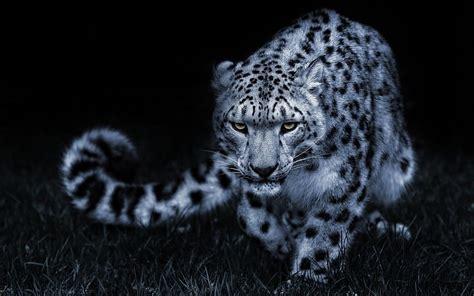 macbook pro 1 1 snow leopard descargar snow leopard v10 6 0