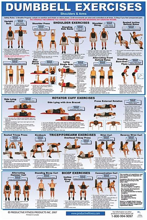 dumbbell shoulders arms exercise poster laminated