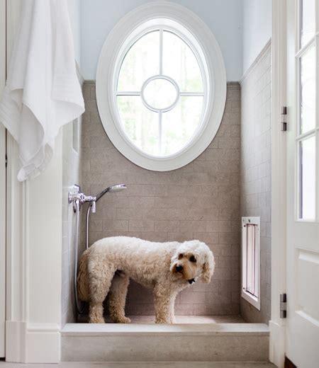 puppy shower mudroom shower contemporary laundry room hgtv