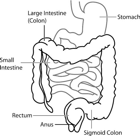 rectum and diagram low fodmap diet the healthy gut clinic
