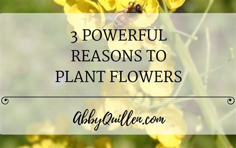 8 Reasons To Send Flowers by 3 Powerful Reasons To Plant Flowers