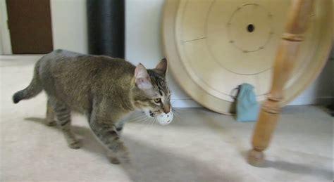 cat dinner monkey the cat hunts for dinner 171 adafruit industries