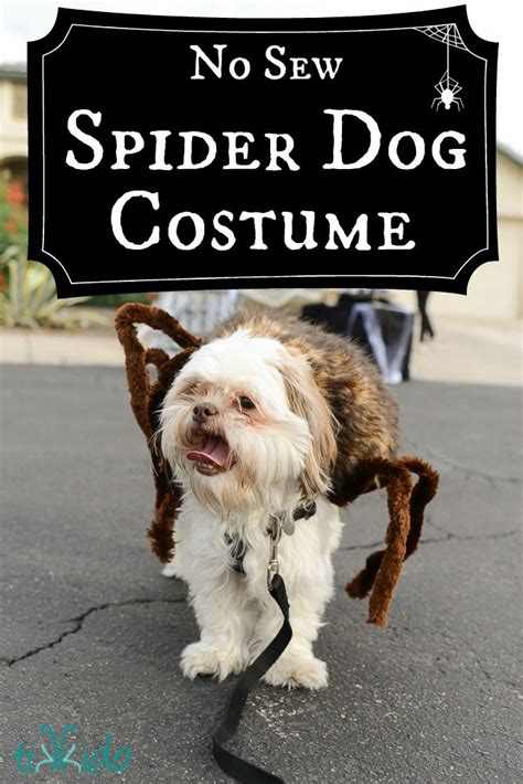 spider costume for dogs best 25 spider costume ideas on spider costume for dogs diy exterior