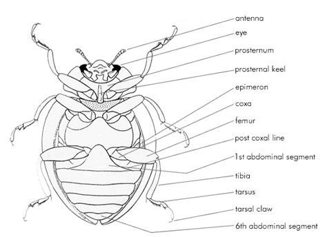ladybug diagram 1000 images about ladybug on we the o jays