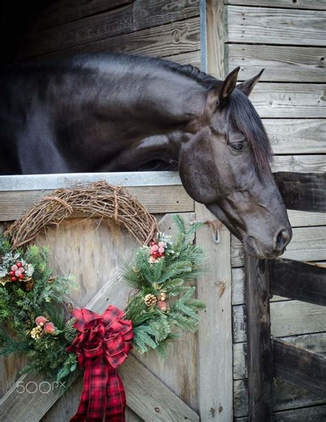 horse  barn  christmas wreath hanging   door  horse  eat  beautiful