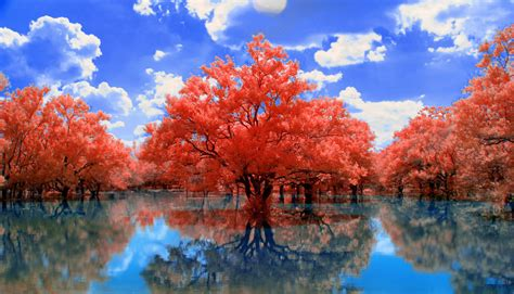 red trees by helios spada on deviantart
