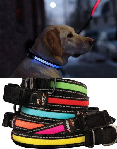 Gift Card Puzzle Vault Amazon - led rechargeable dog leash the coolest stuff ever