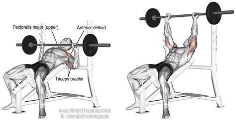 incline bench press exercise incline barbell bench press main muscles worked