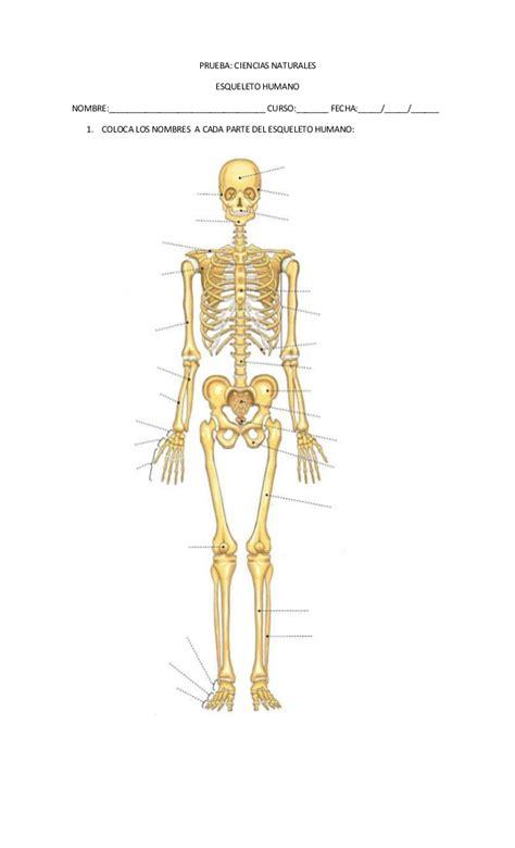 imagenes asombrosas del cuerpo humano prueba esqueleto humano