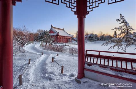 winter wonderland at the chinese garden of the botanical