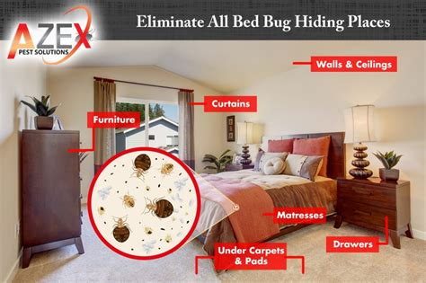 can you see bed bugs during the day bed bug heat treatments azex pest solutions bed bug