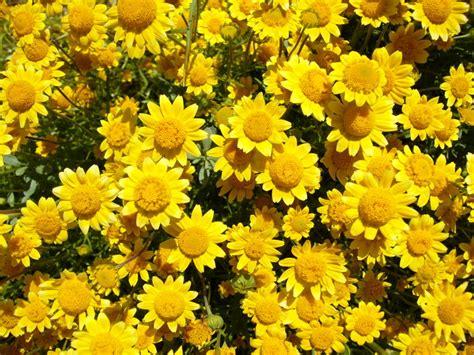 summer flowers names all seasons garden centers