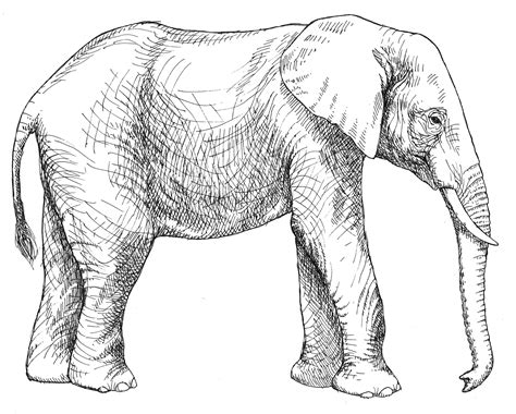 Color Of Elephants by Elephant Coloring Pages Bestofcoloring