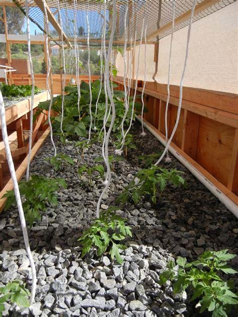 zucchini vertical gardening growing squash and