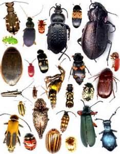j ai peur des insectes