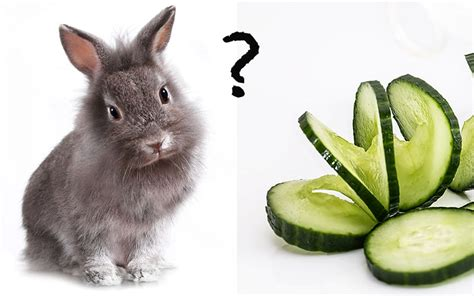 vegetables a rabbit can eat can rabbits eat cucumber and do bunnies like cucumber snacks