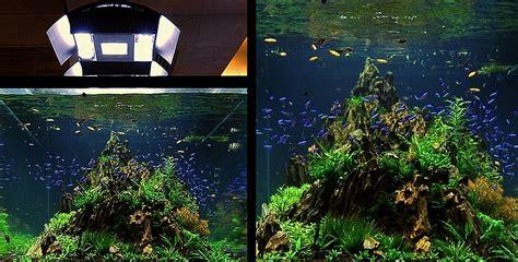 Rumah Bakteri Aquascape Base One Substrate bubbles aquarium aquascapes tank setups projects