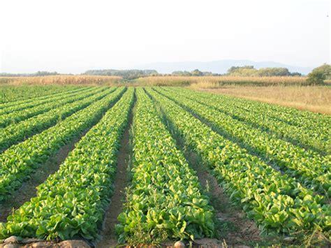alimenti biologici torino vendita prodotti biologici piemonte frutta integrata torino