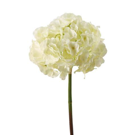 fiore ortensia fiore ortensia adriani e