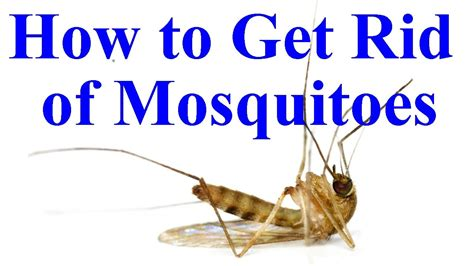 how to get rid of mosquitoes with home remedies how to how to get rid of mosquitoes in yard house youtube