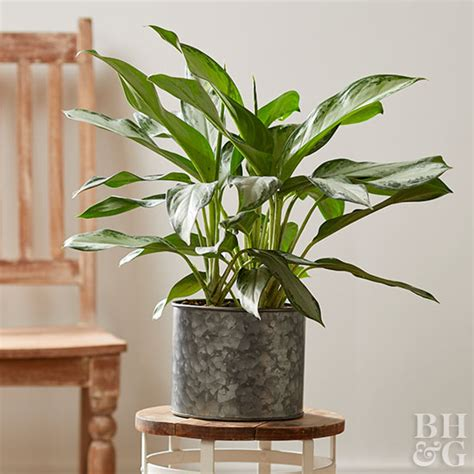 houseplant for low light indoor plants for low light