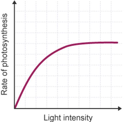 How Does Light Intensity Affect Photosynthesis bitesize gcse biology wales 2016 onwards