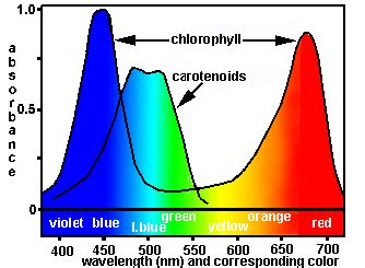 what color is chlorophyll docs lectsupl physiolg physiol