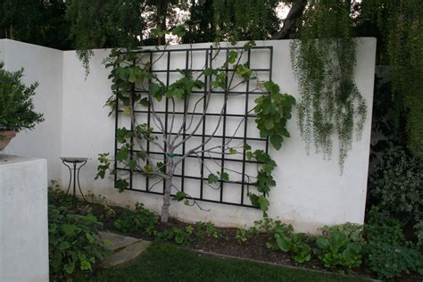 Metal Vine Wall Trellis Pictures To Pin On Pinterest Garden Metal Wall