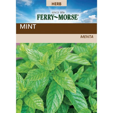 ferry morse peppermint seed   home depot