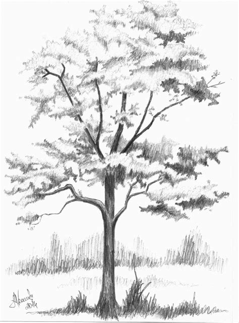 How To Draw A Tree Psikotes 54 Best Images About How To Draw Realistic Trees Plants