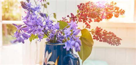 fiori primaverili da vaso fiori primaverili da vaso i 10 fiori da avere in casa leitv
