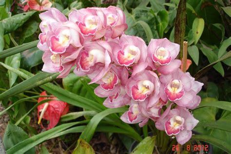 imagenes flores orquideas flores orquideas fotos 11 car interior design